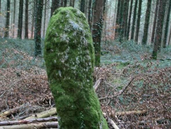Les Mégalithes de la forêt de Camors