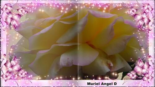 Aux Coeurs Des Fleurs