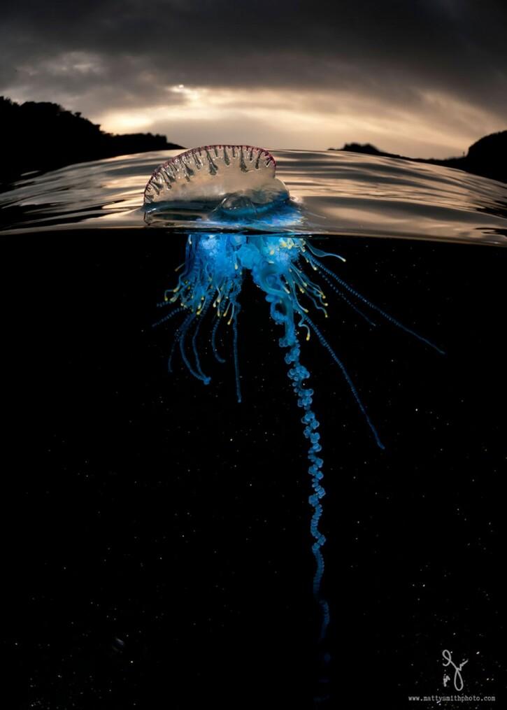 Les Habitants de l'Océan: 21 images loufoques