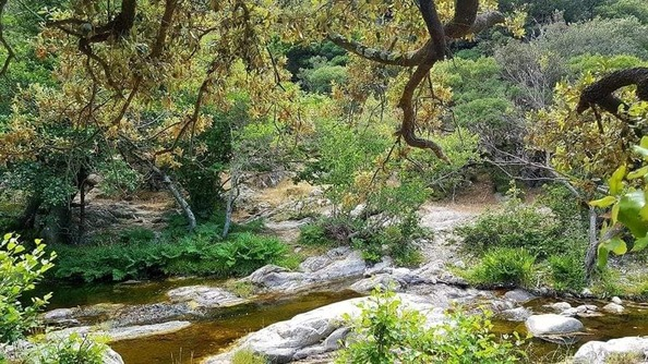 Peut être une image de nature et arbre