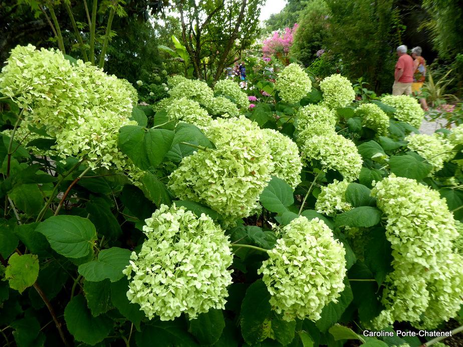 * Encore des fleurs à la Promenade Fleurie*