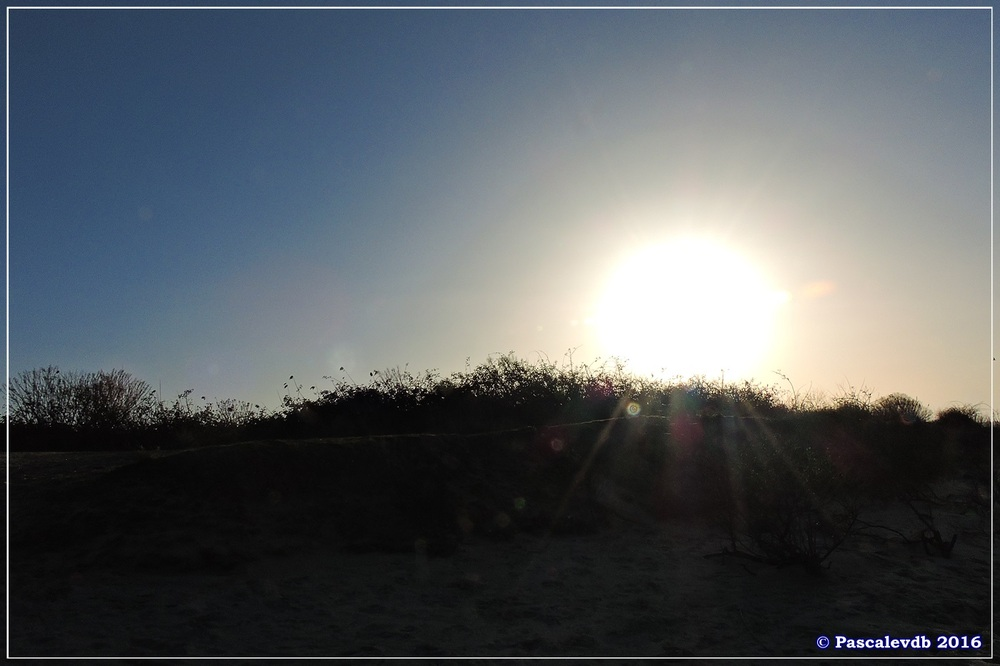 Port du Rocher et près salés est - La Teste de Buch - Février 2016 - 7/12
