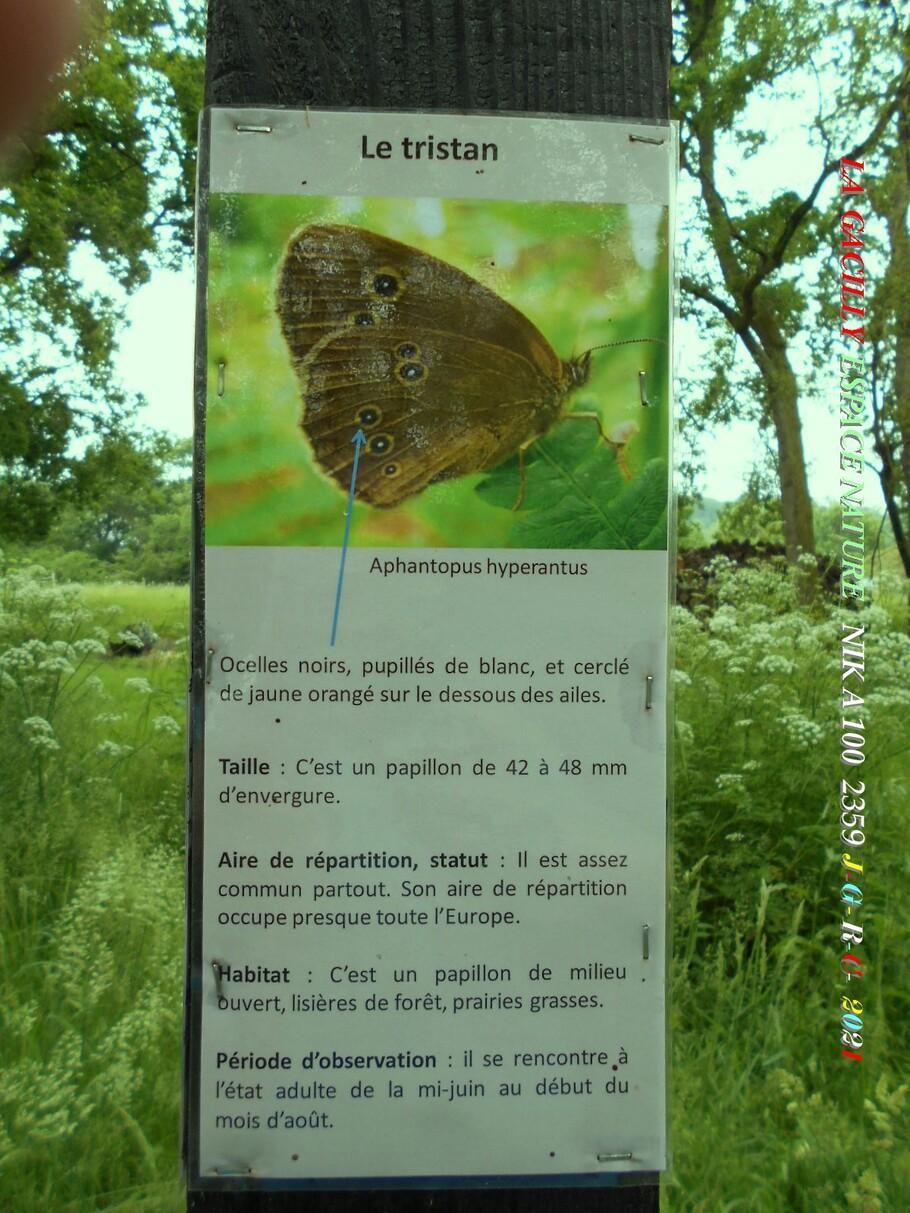 ESPACE NATURE:  D 30-06-2021   5/6  chemin du ru des Brelles LA GACILLY