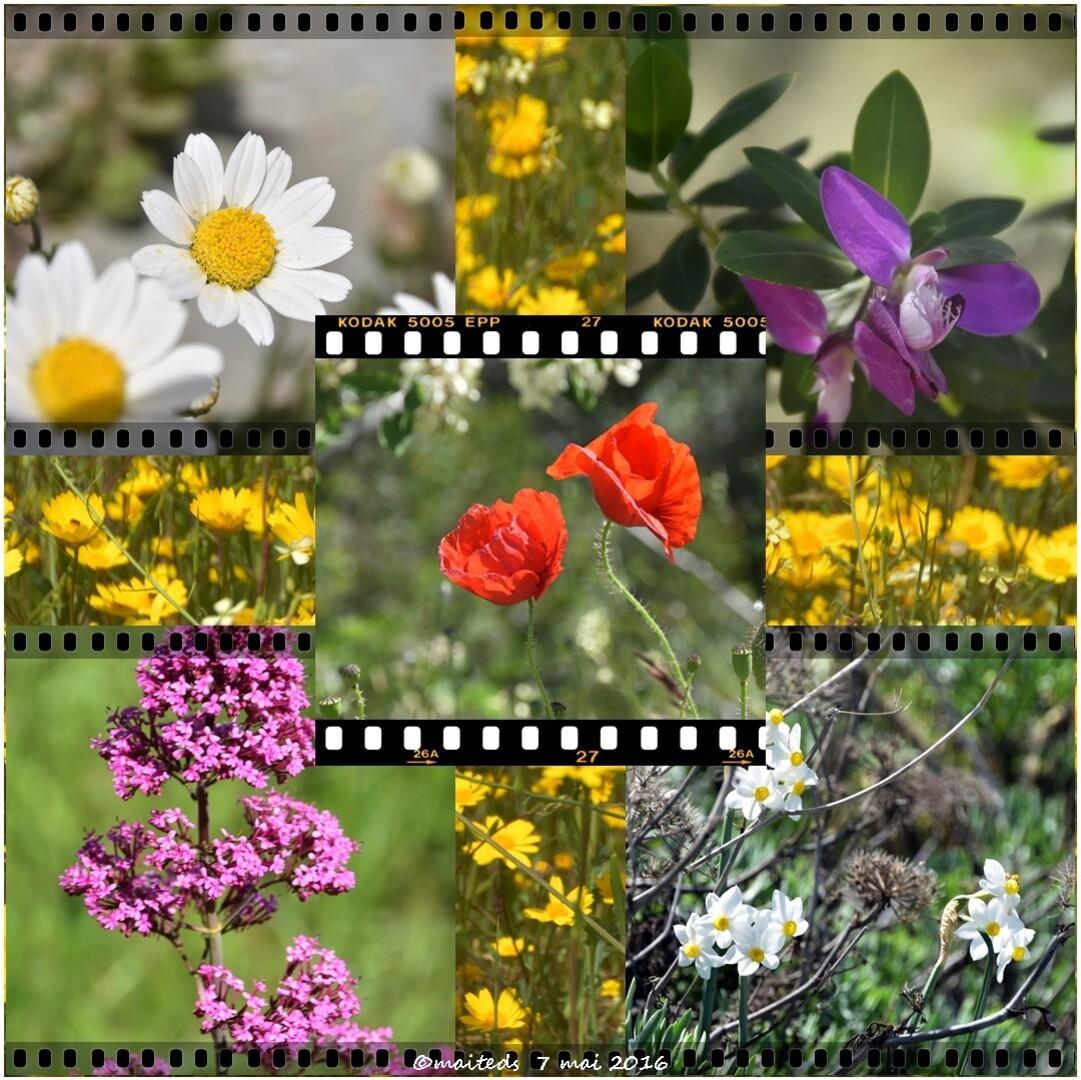 fleurs des champs pour nos amis disparus