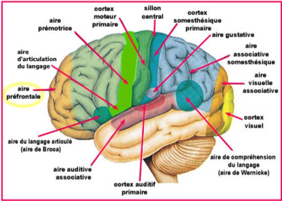 Le sommeil est indispensable à notre mémoire. (7)