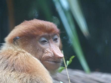 Zoo de Singapour - galerie de portraits