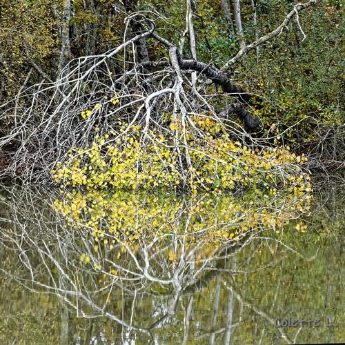 Histoires de feuilles