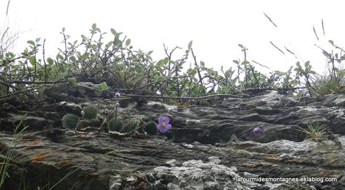 Grassettes aux Gloriettes (1)