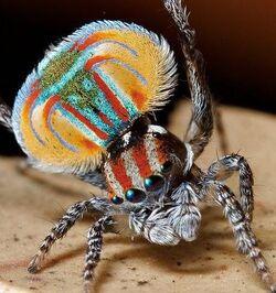 Araignées, toiles d'araignées