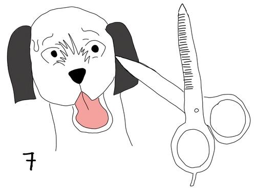 Les 6 dures étapes du toilettage chez un chien