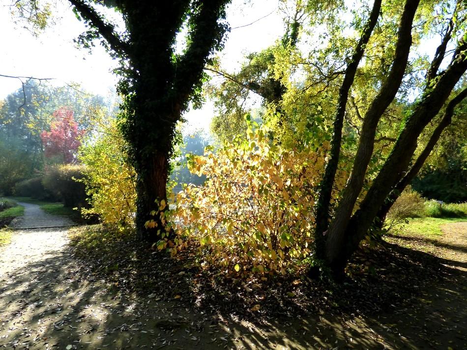 Bel automne 2016
