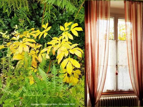L'automne à partir de chez moi...