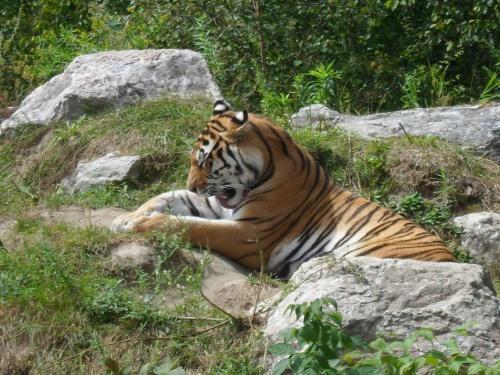 Zoo de Saint Félicien