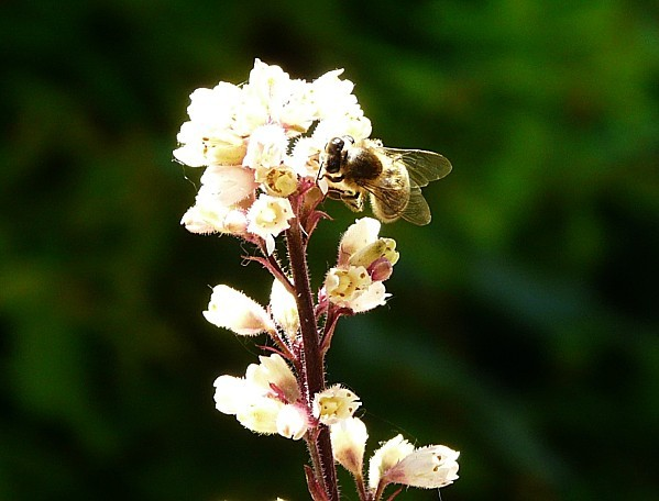 abeilles-4-6-008.jpg