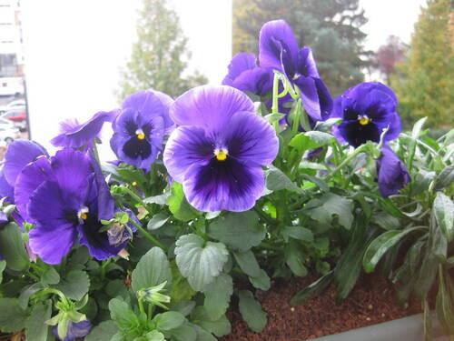 Les fleurs demandées par Jean Pierre