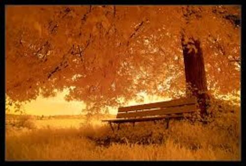 automne ...