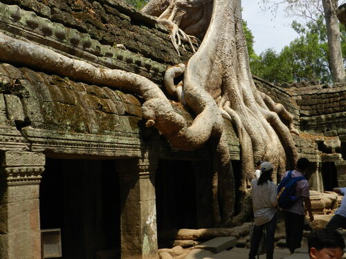 CAMBODGE, temple Ta prohm