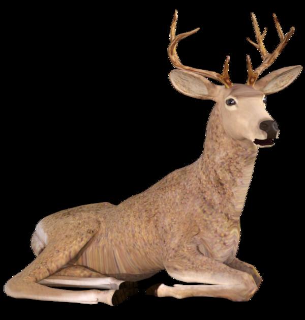 Tube animal cerf (render-image)