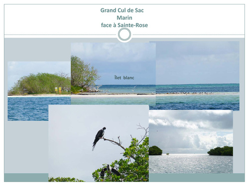 Mangrove et massif corailien