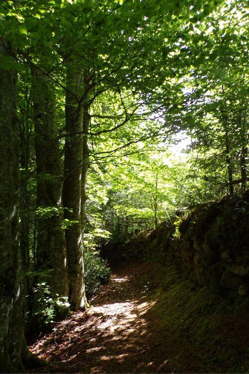 Promenade en forêt ...