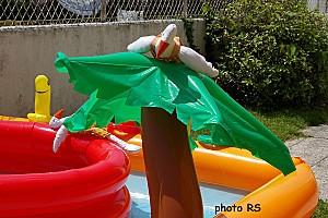 Oies sur piscine 05