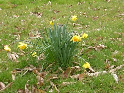 - Quelques images du printemps -