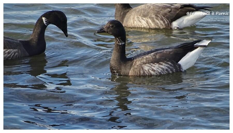Oiseaux du littoral en hiver