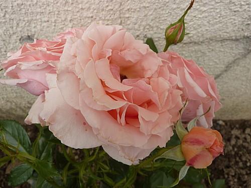 fleurs-et-escargot-010.jpg