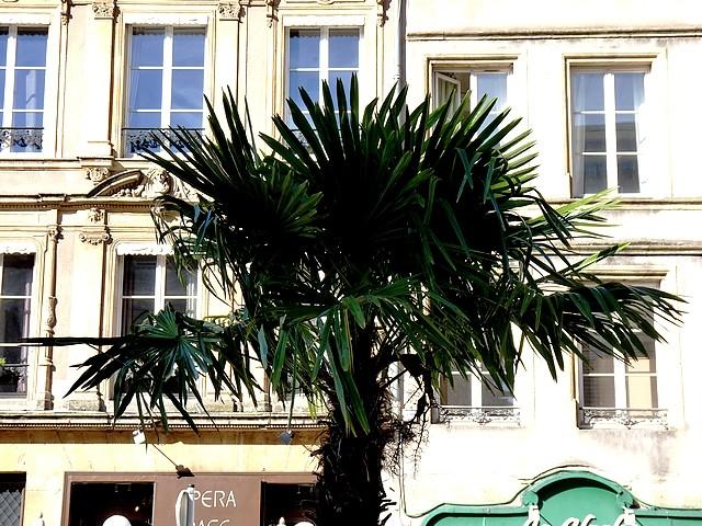Metz place de Chambre 8 Marc de Metz 19 10 2012