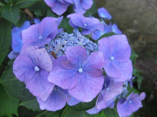 Défi n°129 : le bleu qui est ma couleur préférée
