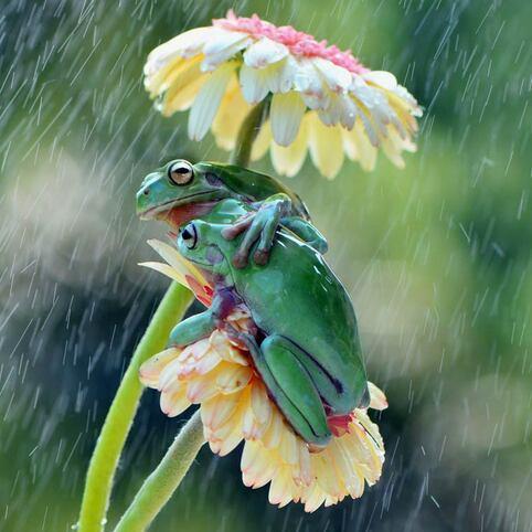 IMAGE : On se tient chaud sous la pluie