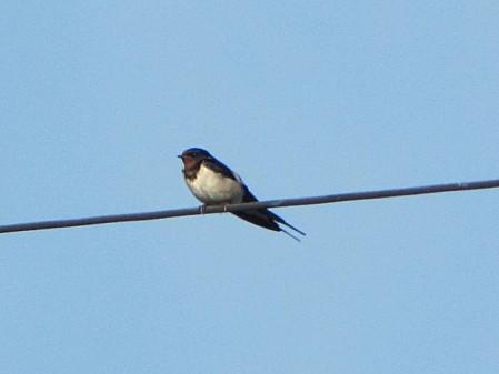 les-oiseaux-et-autres-volatiles 0681