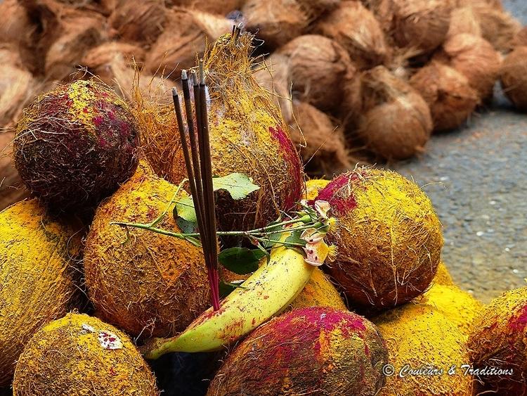 Présentation des noix de cocos