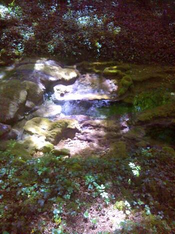 Ma forêt enchantée: de l'ombre à la lumière