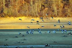 Observation oiseaux migrateurs à Puydarrieux
