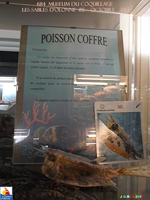 MUSEUM DU COQUILLAGE  6/16   vacances 10/ 2013 SABLES D'OLONNE    30/12/2013