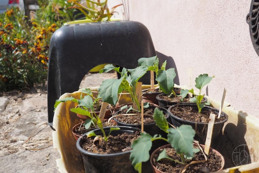 Notre presse-mottes et les semis de printemps