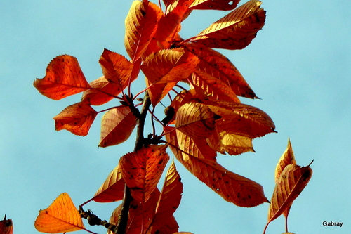 Des feuillages d'automne