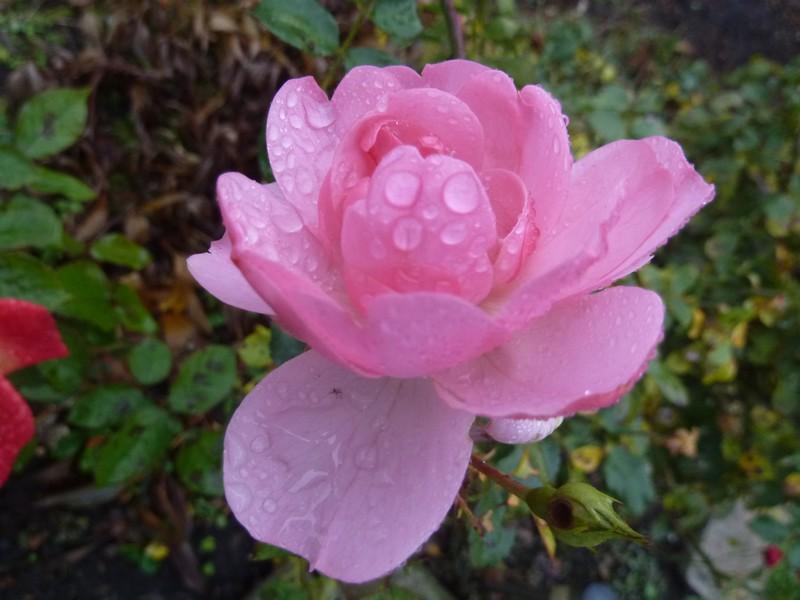 La pluie d'été