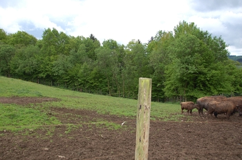 Parc animalier Bouillon 2013 enclos 286