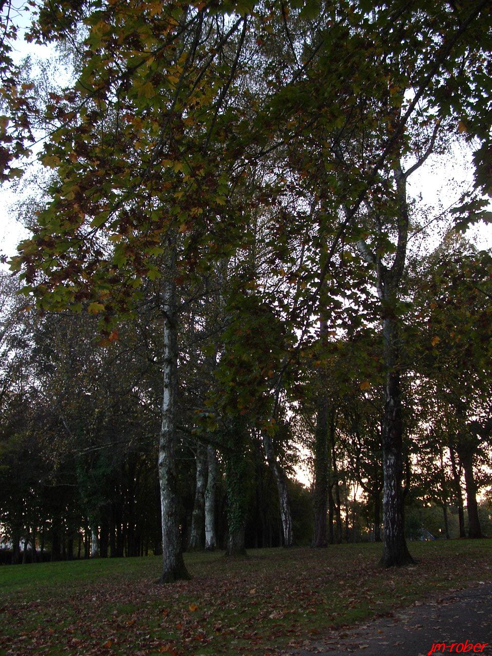 Les Couleurs d'Automne, les feuilles se ramassent à la pelle