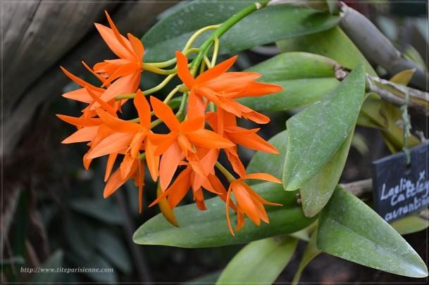 Jardin des Plantes 1 000 orchidées 2