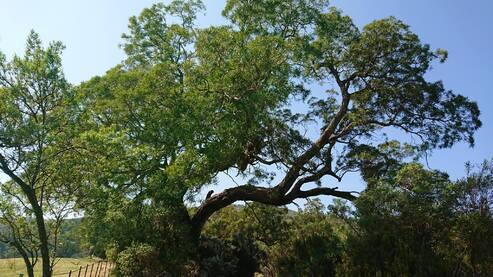 L'image contient peut-être: arbre, ciel, plante, plein air et nature