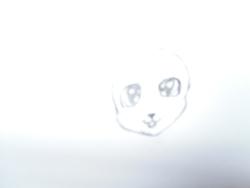 Chauve-souris chibi