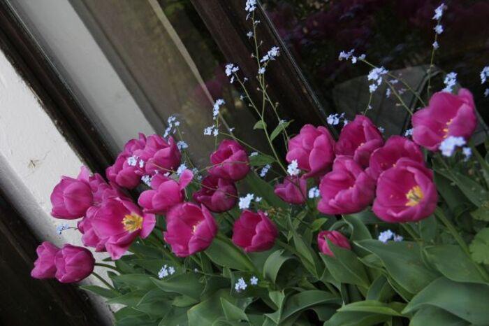Jardinières de printemps (3/3)