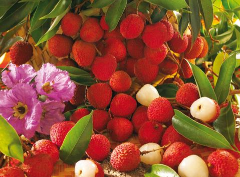 litchis (île de la Réunion)