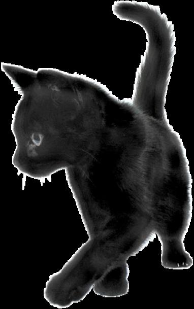 Tubes chat en PNG