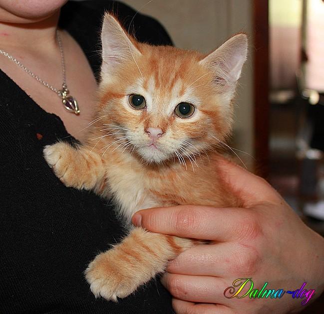 Lookee le nouveau petit chat de ma fille