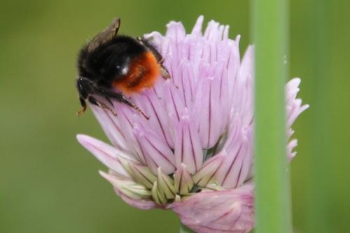 un ventre couvert de pollen