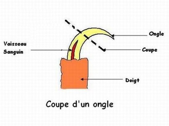 Entretien Taillage Du Bec Et Des Ongles Vakhesso Santiago